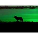night-vision-for-wildlife-observation
